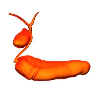 Някои храни, като боровинки, чесън, броколи, сладък картоф, са много полезни за панкреаса.
